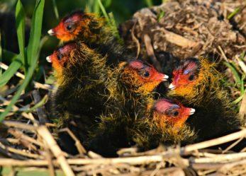 Educatore di asilo nido