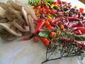 La raccolta di frutta e verdura