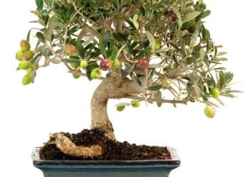 Incentivi per le piccole e medie imprese olivicole dalla Camera di commercio di Brescia