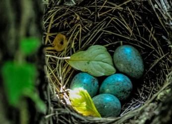Il comune di Brescia cerca 4 educatori di asilo nido