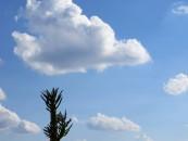Ecogestioni cerca un consultant ambientale con esperienza