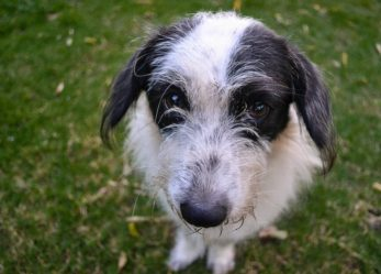 Educatore cinofilo: la professione per te che ami i cani