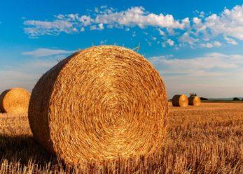 La tua tesi in agraria viene premiata da AgroInnovation Award