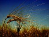 Giovani e agricoltura binomio possibile
