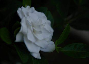 Corso gratuito per addetto alle composizioni floreali