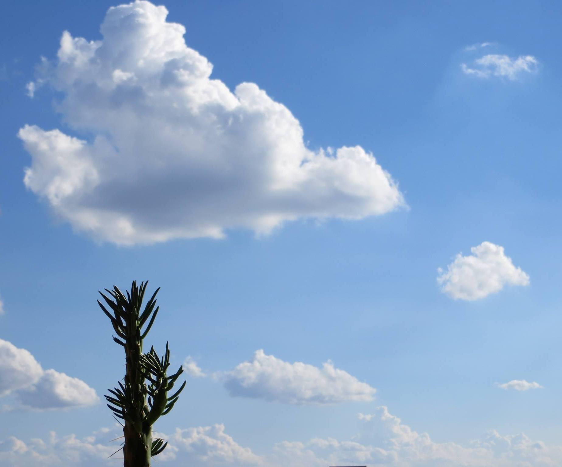 cactus e nuvole dalla finestra