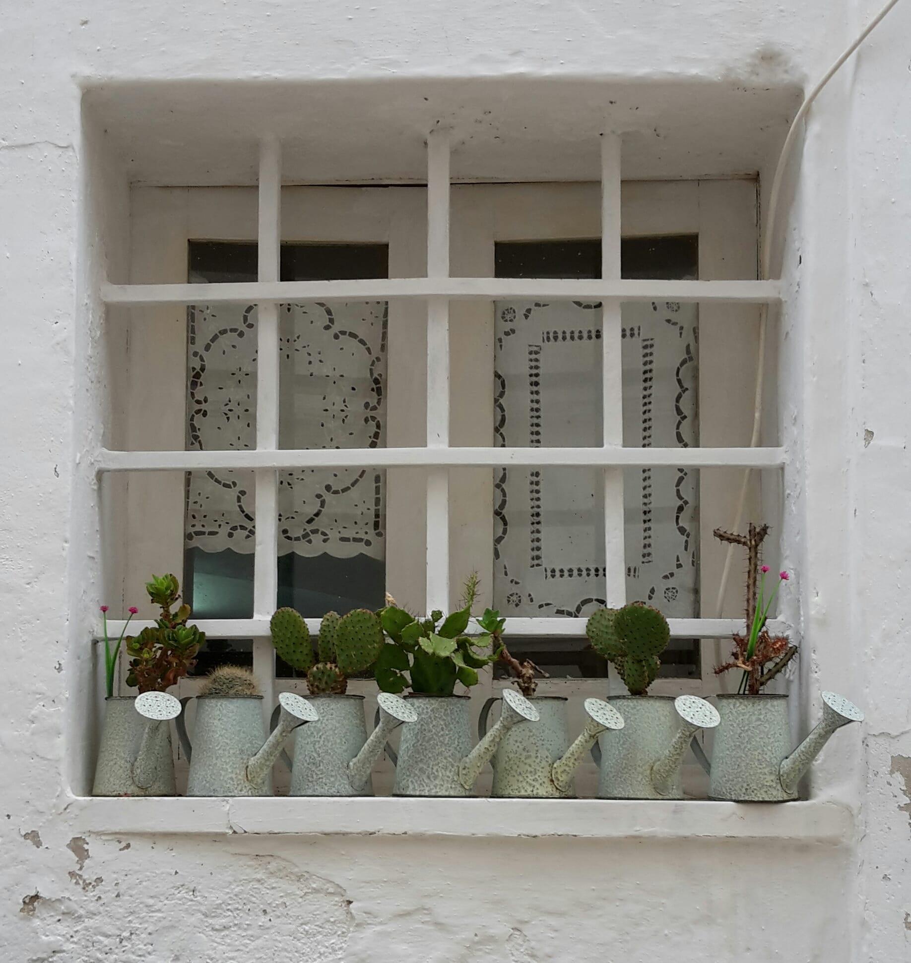 finestra con vasetti di piante grasse