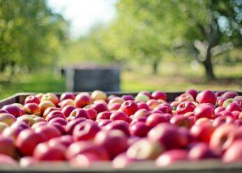 Lavoro stagionale nell'agricoltura: come trovarlo