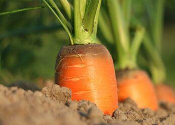 Finanza agevolata per la tua impresa agricola