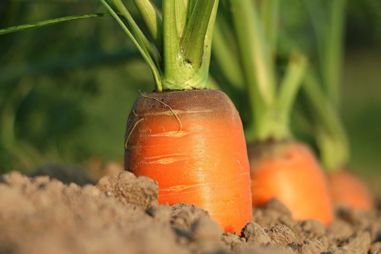 carote nel terreno in primissimo piano