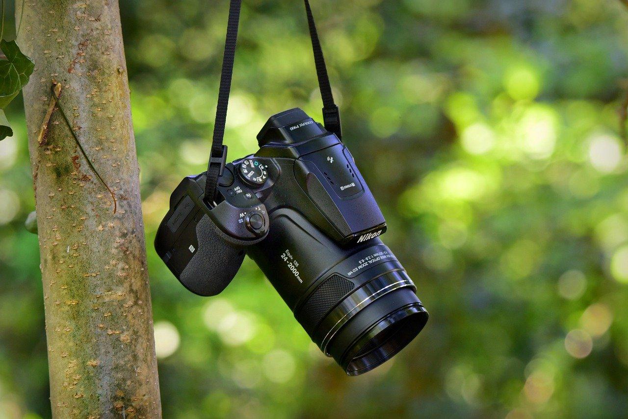 macchina fotografica appesa a un ramo