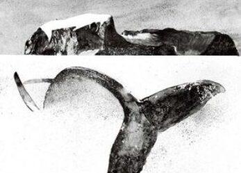 Cetacea 2, l'incantatore di balene