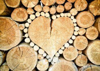 Fotografa il legno per il concorso AVIS