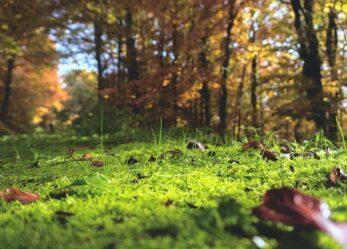 La tua impresa è sostenibile? Partecipa al Premio Impresa Ambiente